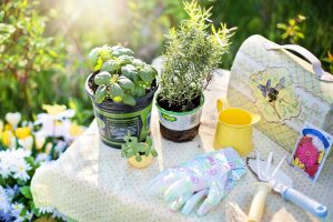 How to Grow Herbs, Vegetables, and Flowers