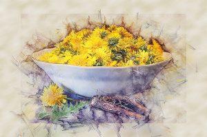 dandelions, food, medicine, herbal uses,