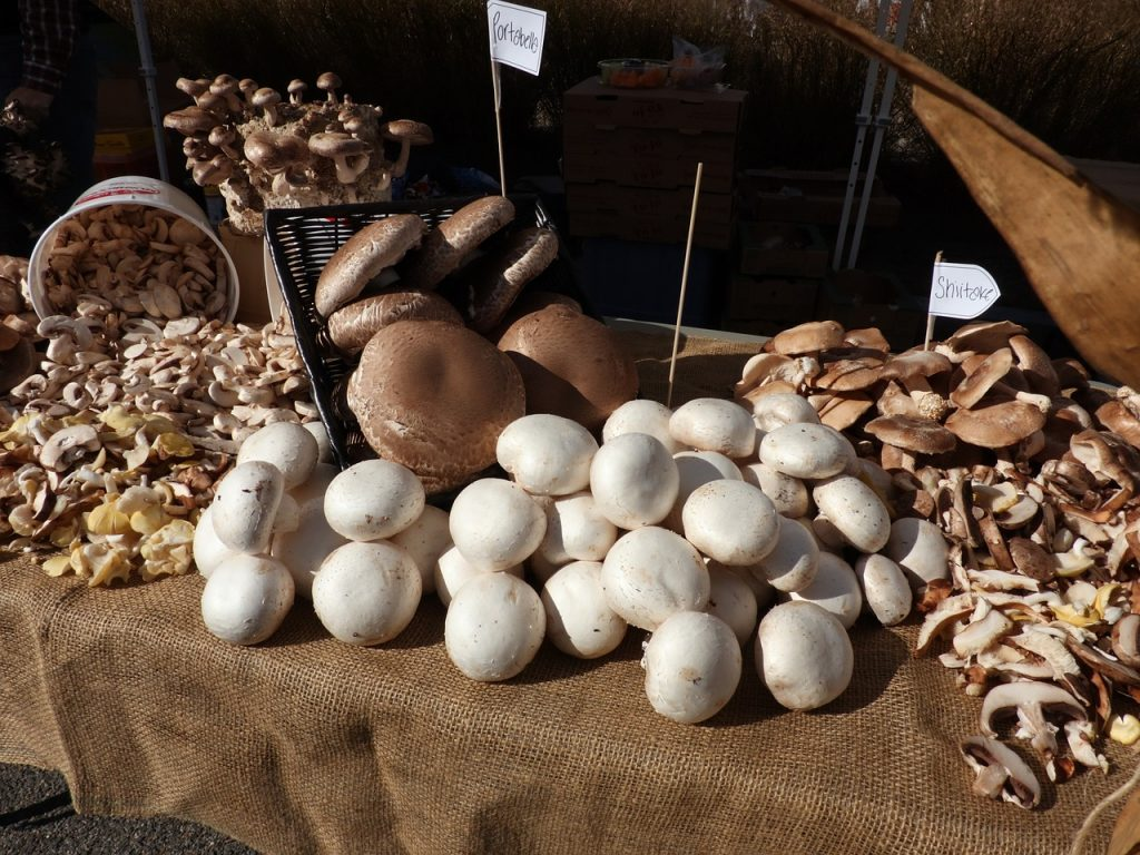 grow mushrooms at home